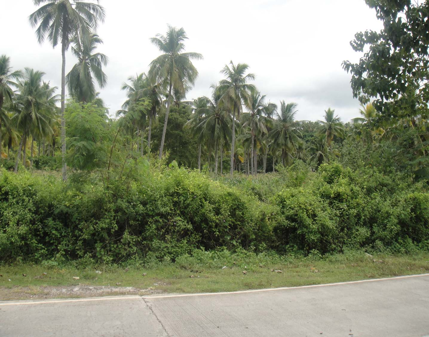 FOR SALE: 269 Square Meters Lot at Kaputian with Free Beach Club