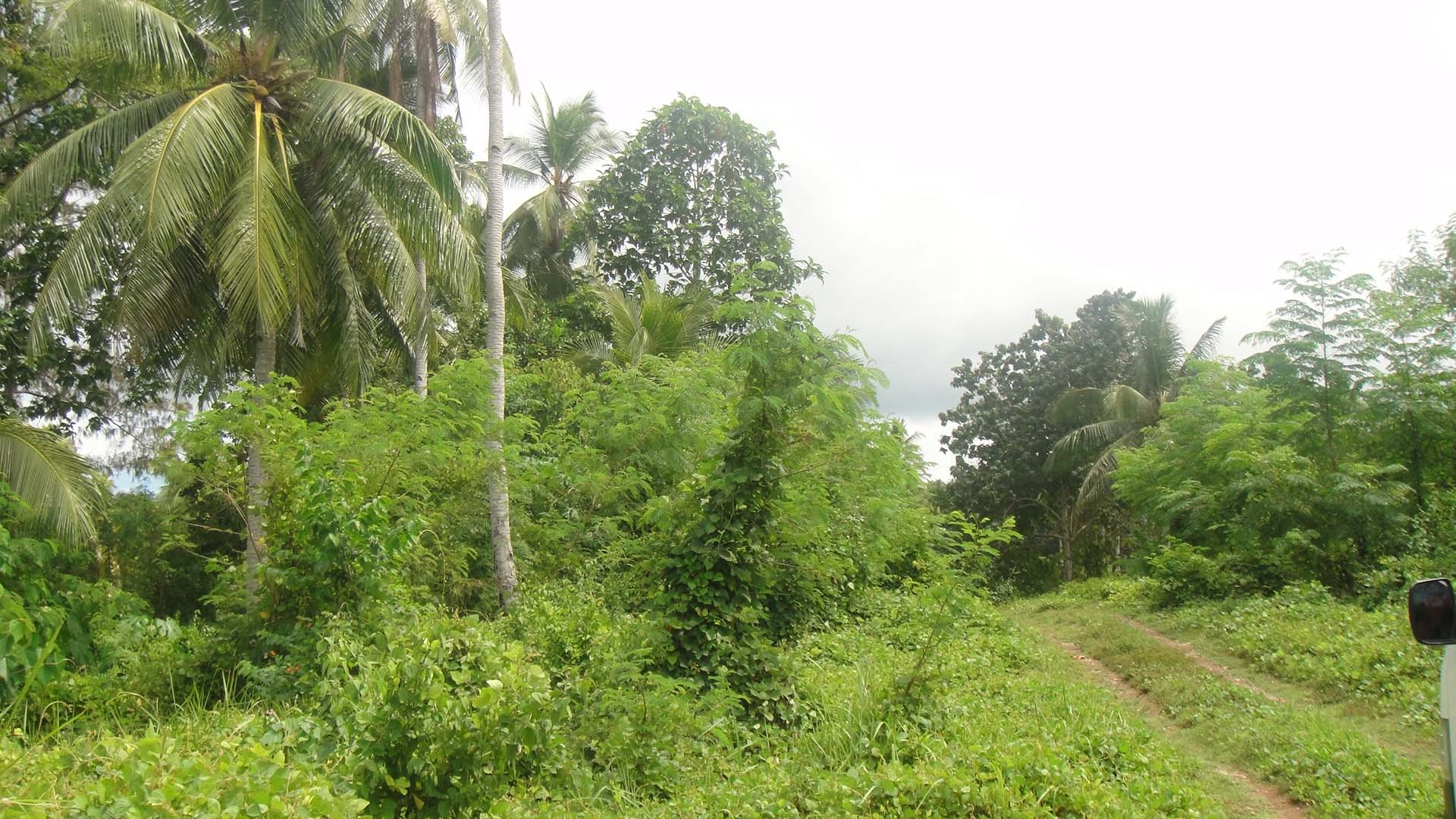 FOR SALE: 357 Square Meters Corner Lot Nearby Cemented Road of Kaputian