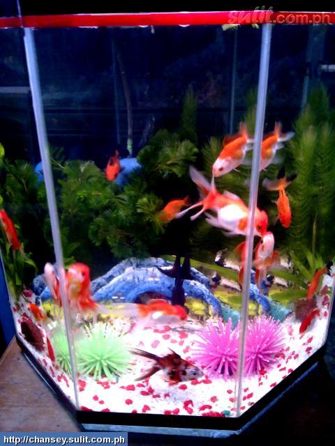 Aquarium for sale pampanga big aquarium fish tank for for How to lower ph in fish tank